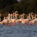 Activities | Flamingos