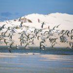Bird Species & Threatened Birds