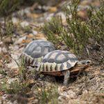 Amphibian, Invertebrate & Reptilian Species