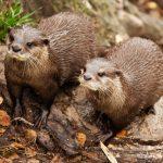 Terrestrial Mammal Species